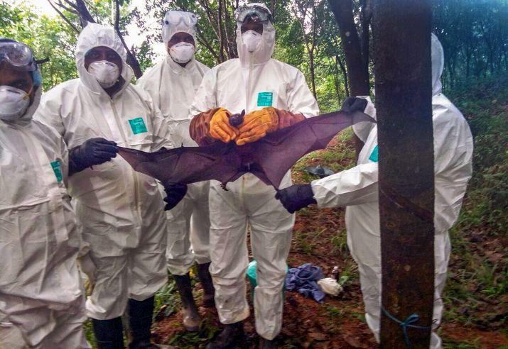 تنقله الخفافيش علماء يحذّرون من تفشّي فيروس جديد