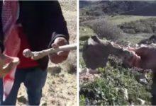 بالفيديو سليانة مواطن يستولي على مقبرة ويستخرج جثث الموتى لزراعة شجر الزيتون مكانها