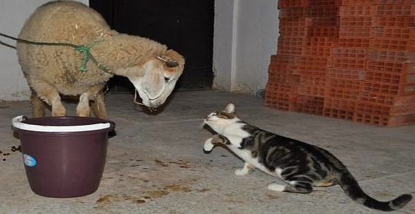 لماذا تختفي القطط يوم عيد الأضحى وأين تذهب